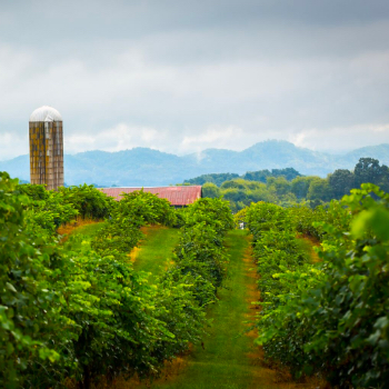 Wine Trail of West TN